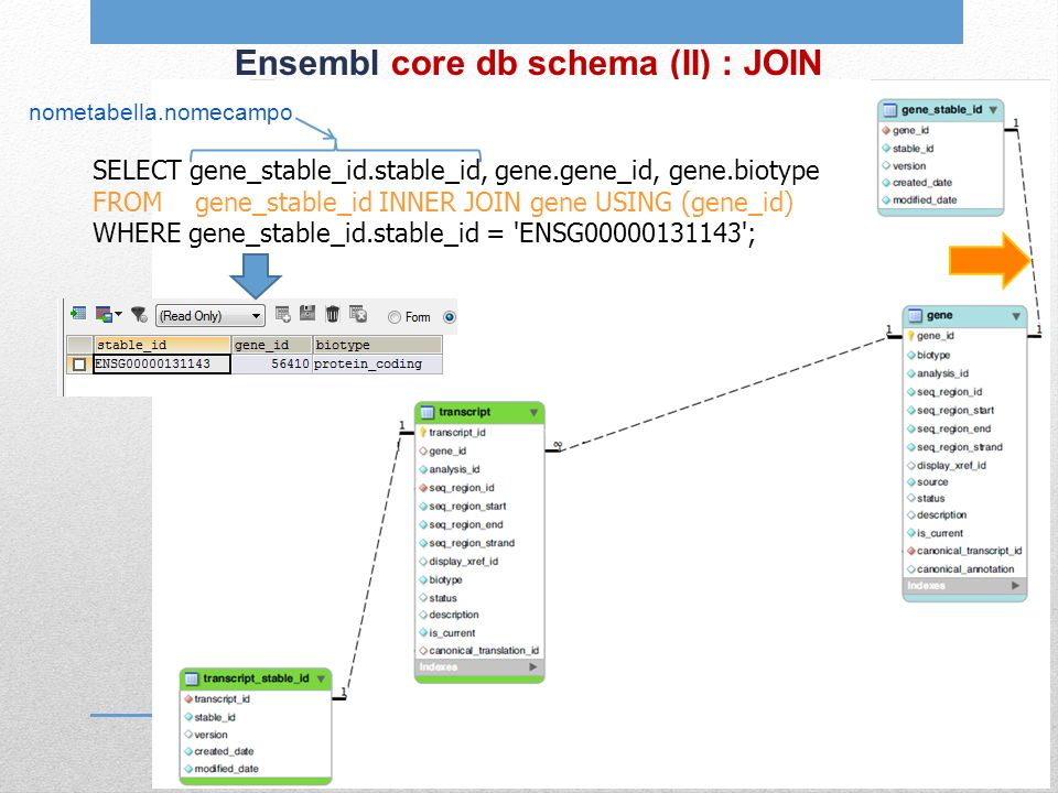 Ensembl core db schema (II) : JOIN SELECT gene_stable_id.stable_id, gene.gene_id, gene.biotype FROM gene_stable_id INNER JOIN gene USING (gene_id) WHERE gene_stable_id.stable_id = ENSG00000131143 ; nometabella.nomecampo