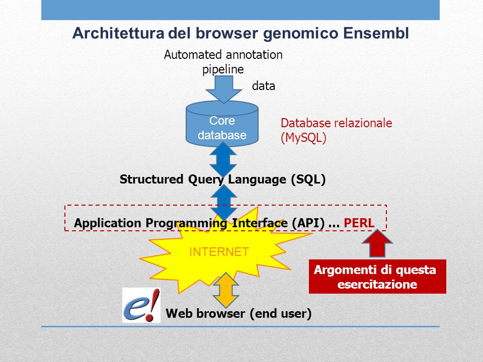 INTERNET Architettura del browser genomico Ensembl Automated annotation pipeline data Core database Database relazionale (MySQL) Structured Query Language (SQL) Application Programming Interface (API) … PERL Web browser (end user) Argomenti di questa esercitazione