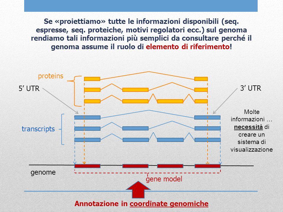 BROWSERS GENOMICI Ne esistono diversi: Principalmente 3, NCBI map viewer (http://www.ncbi.nlm.nih.gov/projects/mapview/), Ensembl (http://www.ensembl.org/index.html) e UCSC genome browser (http://genome.ucsc.edu/).http://www.ncbi.nlm.nih.gov/projects/mapview/http://www.ensembl.org/index.htmlhttp://genome.ucsc.edu/ Presentano le stesse informazioni, ma in modo diverso: tutti e tre permettono di trovare la posizione genomica di una sequenza (mediante allineamento o ricerca per parola chiave) e di visualizzare la regione genomica associata.