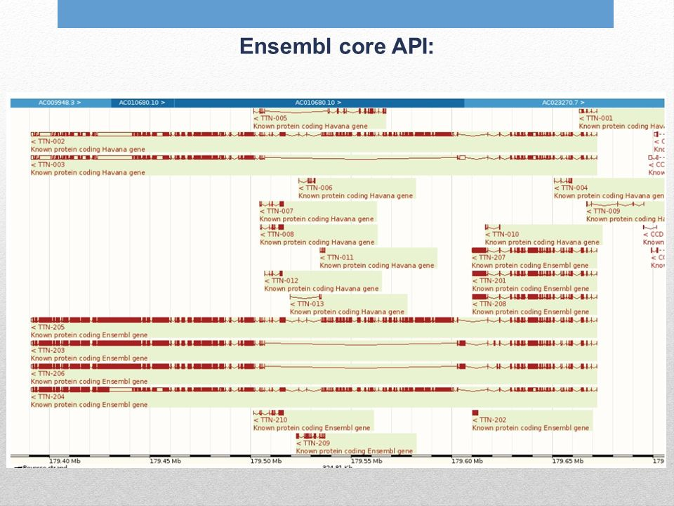 Ensembl core API: