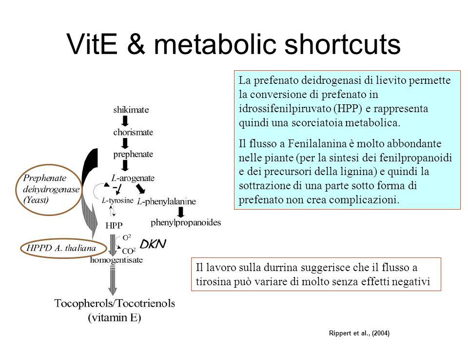 VitE & metabolic shortcuts Rippert et al., (2004) La prefenato deidrogenasi di lievito permette la conversione di prefenato in idrossifenilpiruvato (HPP) e rappresenta quindi una scorciatoia metabolica.