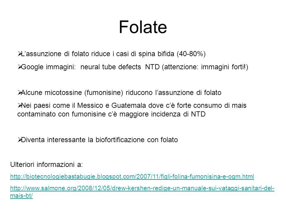 Folate Lassunzione di folato riduce i casi di spina bifida (40-80%) Google immagini: neural tube defects NTD (attenzione: immagini forti!) Alcune micotossine (fumonisine) riducono lassunzione di folato Nei paesi come il Messico e Guatemala dove cè forte consumo di mais contaminato con fumonisine cè maggiore incidenza di NTD Diventa interessante la biofortificazione con folato Ulteriori informazioni a: http://biotecnologiebastabugie.blogspot.com/2007/11/figli-folina-fumonisina-e-ogm.html http://www.salmone.org/2008/12/05/drew-kershen-redige-un-manuale-sui-vataggi-sanitari-del- mais-bt/