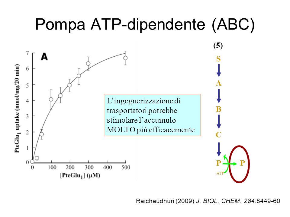 Pompa ATP-dipendente (ABC) Raichaudhuri (2009) J.BIOL.