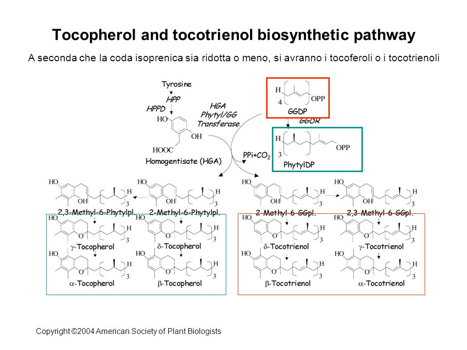 Hanson and Gregory III (2011) Folate Biosynthesis, Turnover, and Transport in Plants.