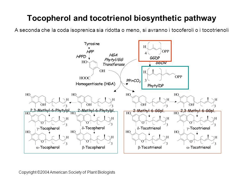 5 10 Monoglutamyl tetrahydrofolate 4-amino-4-deoxychorismate (ADC)