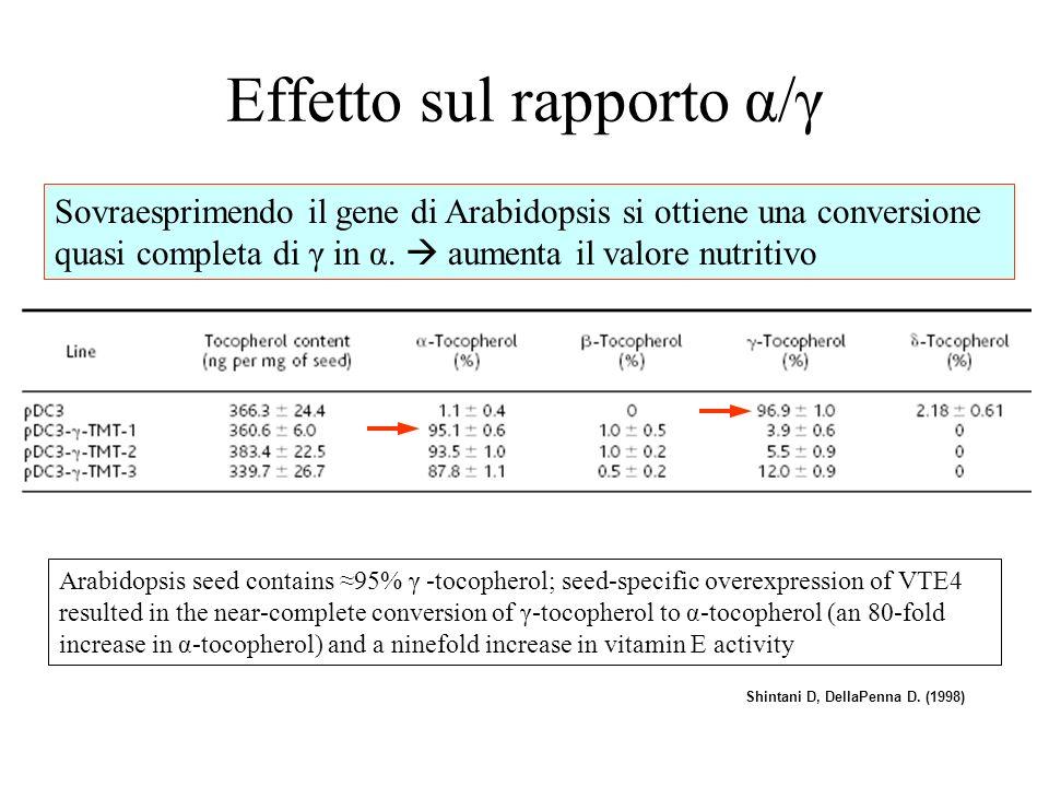 Effetto sul rapporto α/γ Sovraesprimendo il gene di Arabidopsis si ottiene una conversione quasi completa di γ in α.
