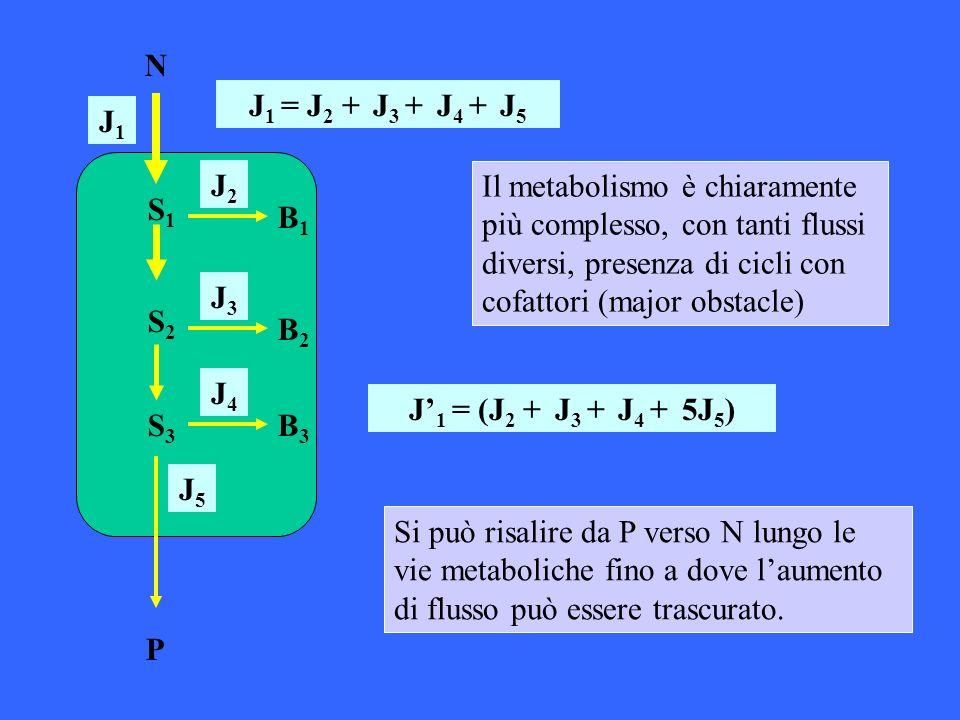 J 1 = J 2 + J 3 + J 4 + J 5 J 1 = (J 2 + J 3 + J 4 + 5J 5 ) Il metabolismo è chiaramente più complesso, con tanti flussi diversi, presenza di cicli co