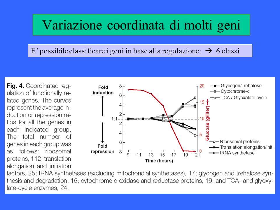 Variazione coordinata di molti geni E possibile classificare i geni in base alla regolazione: 6 classi