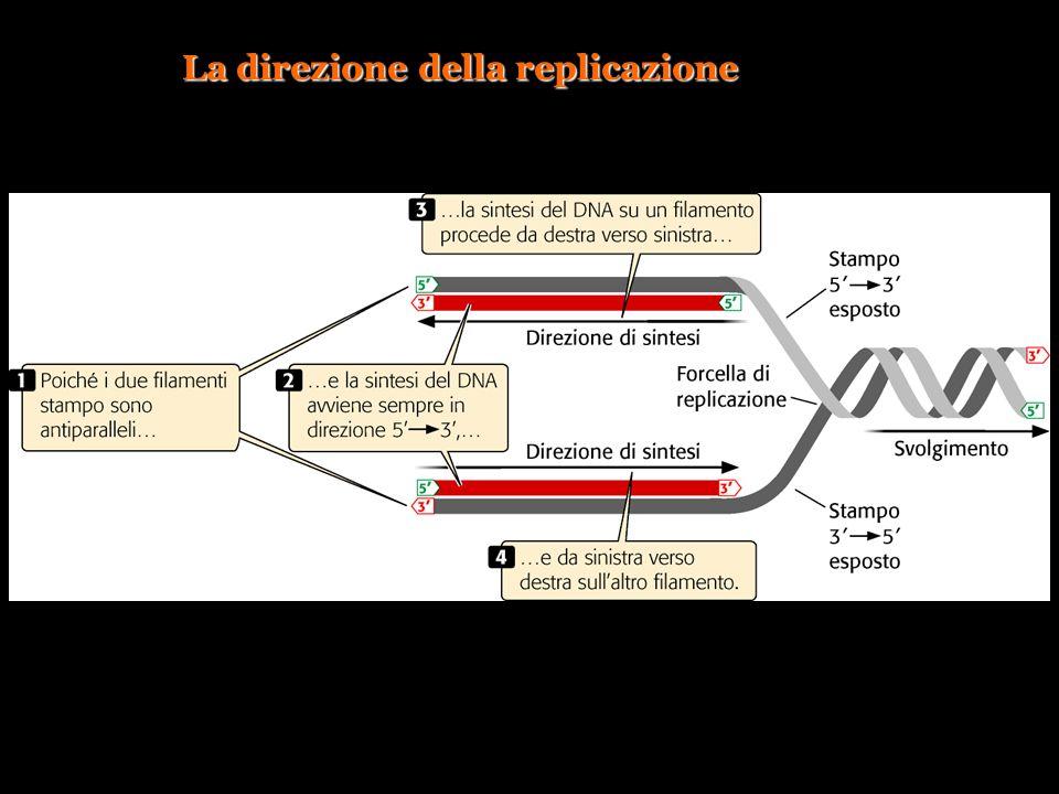 La direzione della replicazione