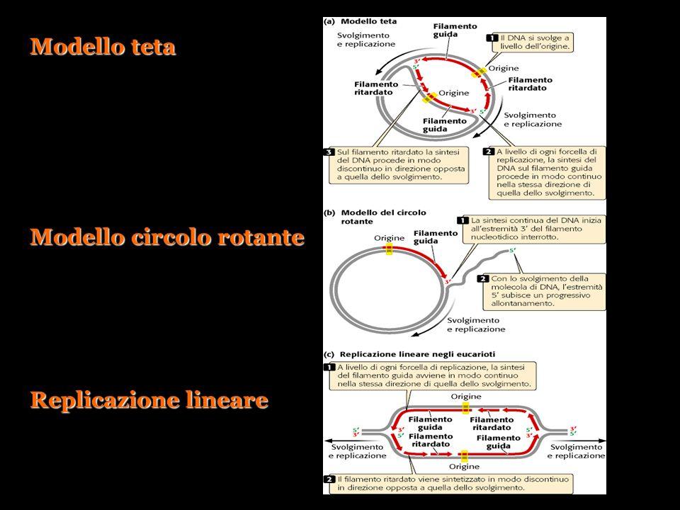 Modello teta Modello circolo rotante Replicazione lineare