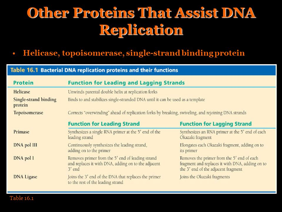 Other Proteins That Assist DNA Replication Helicase, topoisomerase, single-strand binding protein Table 16.1