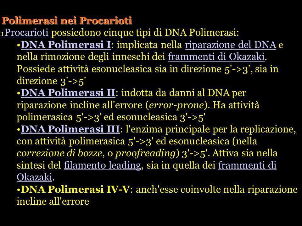 Polimerasi nei Procarioti I Procarioti possiedono cinque tipi di DNA Polimerasi: Procarioti DNA Polimerasi I: implicata nella riparazione del DNA e ne