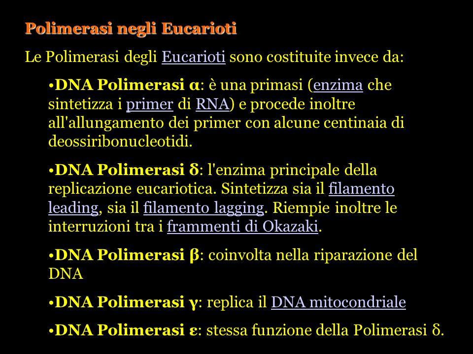 Polimerasi negli Eucarioti Le Polimerasi degli Eucarioti sono costituite invece da:Eucarioti DNA Polimerasi α: è una primasi (enzima che sintetizza i
