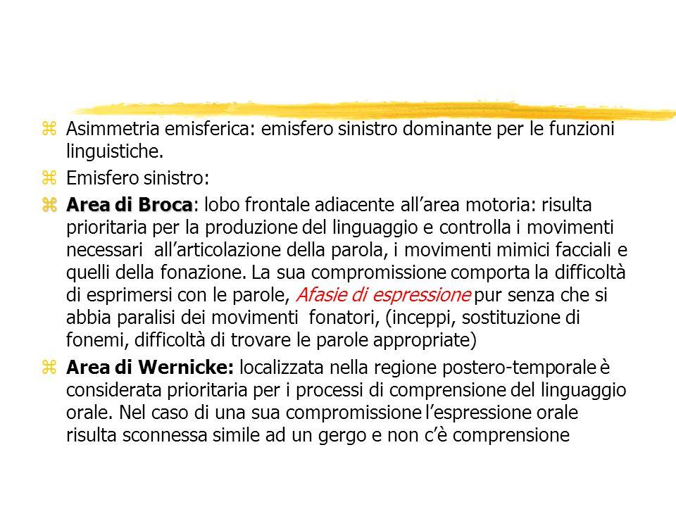 zAsimmetria emisferica: emisfero sinistro dominante per le funzioni linguistiche. zEmisfero sinistro: zArea di Broca zArea di Broca: lobo frontale adi