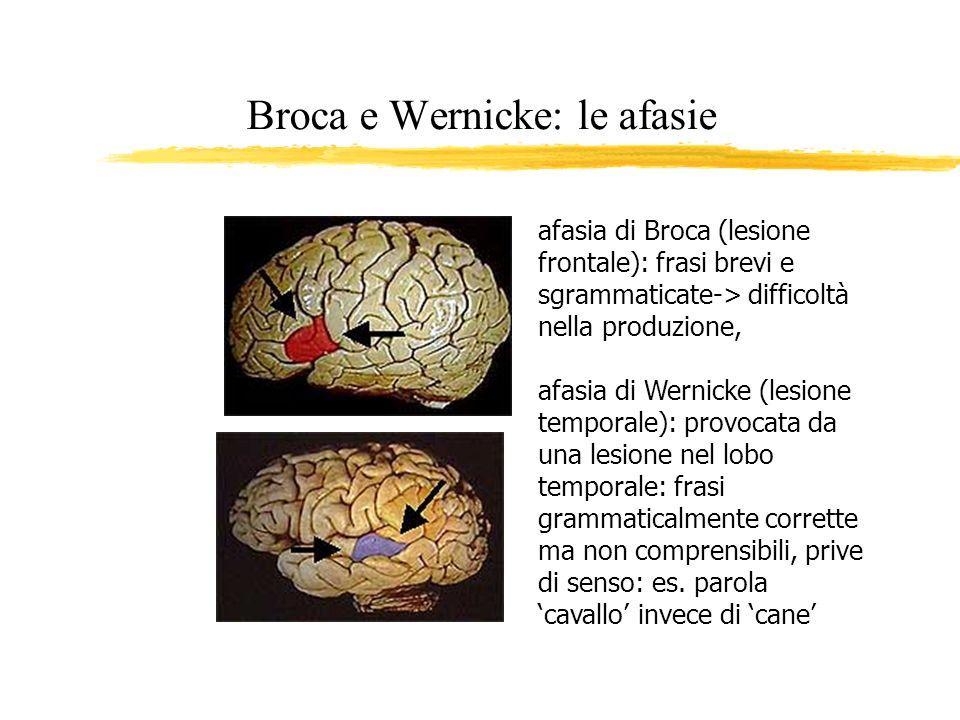 Broca e Wernicke: le afasie afasia di Broca (lesione frontale): frasi brevi e sgrammaticate-> difficoltà nella produzione, afasia di Wernicke (lesione