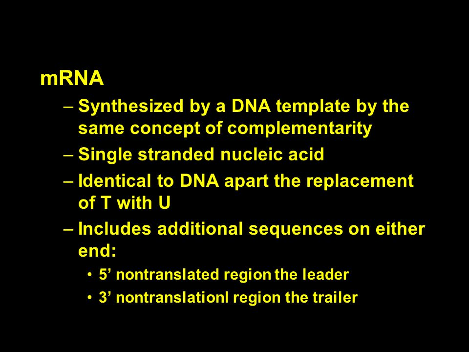 mRNA –Synthesized by a DNA template by the same concept of complementarity –Single stranded nucleic acid –Identical to DNA apart the replacement of T