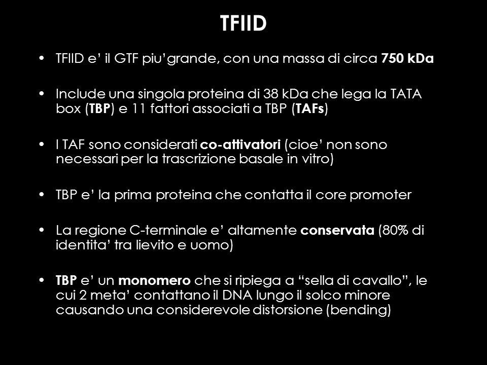TFIID TFIID e il GTF piugrande, con una massa di circa 750 kDa Include una singola proteina di 38 kDa che lega la TATA box ( TBP ) e 11 fattori associ