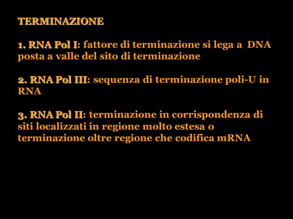 TERMINAZIONE 1. RNA Pol I 1. RNA Pol I: fattore di terminazione si lega a DNA posta a valle del sito di terminazione 2. RNA Pol III 2. RNA Pol III: se