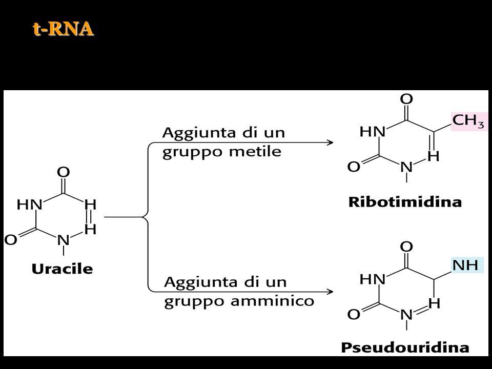t-RNA
