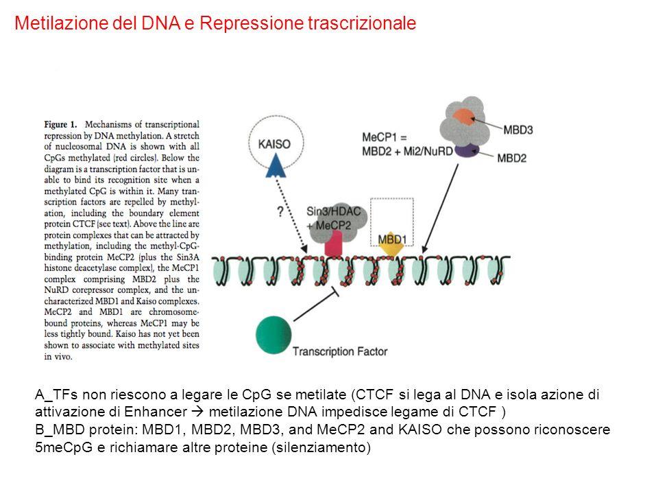 Metilazione del DNA e Repressione trascrizionale A_TFs non riescono a legare le CpG se metilate (CTCF si lega al DNA e isola azione di attivazione di