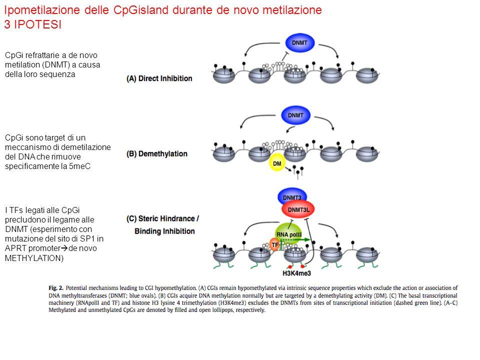 Ipometilazione delle CpGisland durante de novo metilazione 3 IPOTESI CpGi refrattarie a de novo metilation (DNMT) a causa della loro sequenza CpGi son