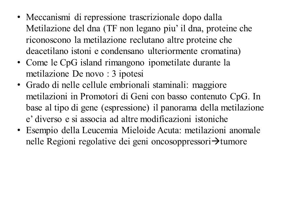 Meccanismi di repressione trascrizionale dopo dalla Metilazione del dna (TF non legano piu il dna, proteine che riconoscono la metilazione reclutano a