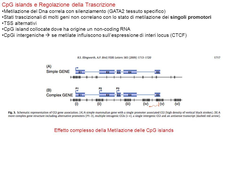 CpG islands e Regolazione della Trascrizione Metilazione del Dna correla con silenziamento (GATA2 tessuto specifico) Stati trascizionali di molti geni