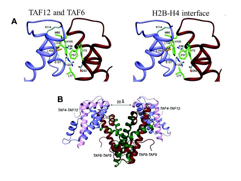 TAF12 and TAF6 H2B-H4 interface