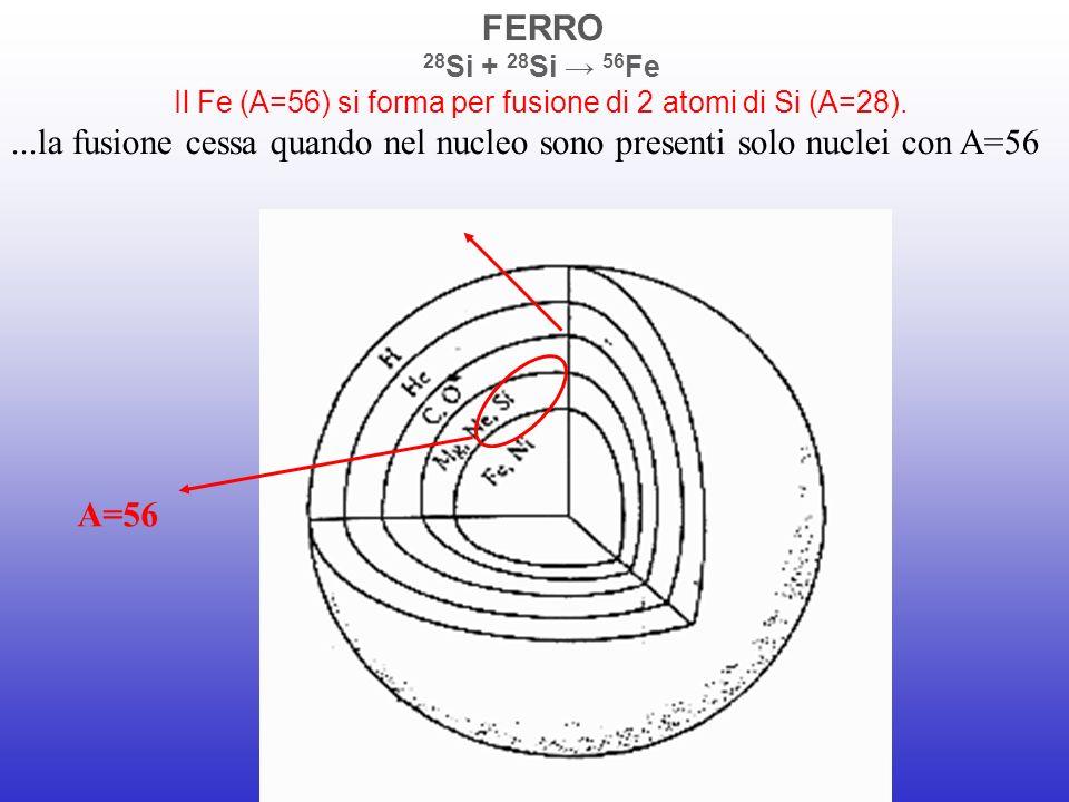 FERRO 28 Si + 28 Si 56 Fe Il Fe (A=56) si forma per fusione di 2 atomi di Si (A=28)....la fusione cessa quando nel nucleo sono presenti solo nuclei co