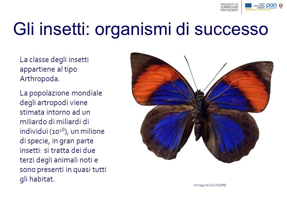 Gli insetti: il volo Gli insetti dispongono di una o due coppie di ali che battono con una velocità elevatissima grazie a muscoli molto efficienti.