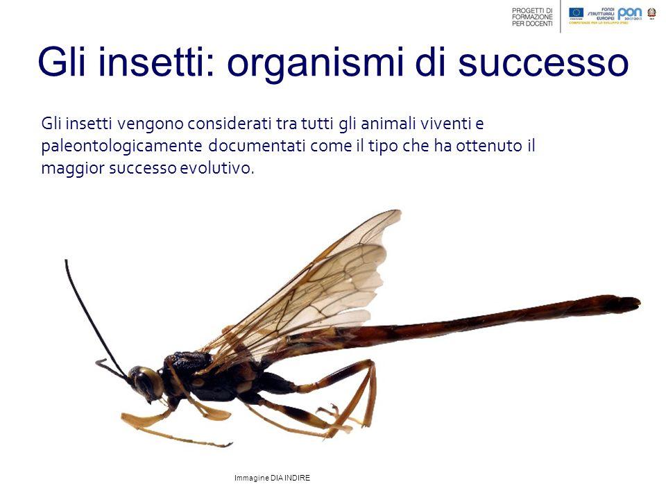 Gli insetti: il sistema nervoso Il sistema nervoso degli insetti corrisponde ad una coppia di cordoni neurali caratterizzati dalla presenza di diversi gangli segmentali intercalati.