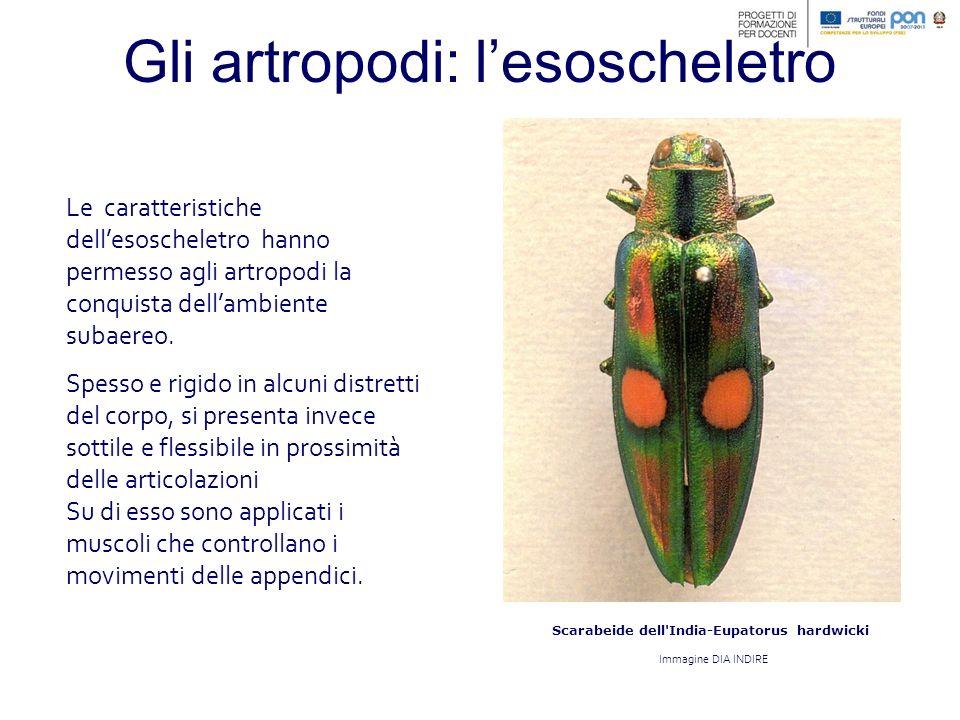 Gli insetti: le dimensioni La piccola taglia ne favorisce tuttavia la dispersione perché permette loro di vivere in spazi limitati occupando nicchie ecologiche che non sarebbero adatte ad animali più grandi.