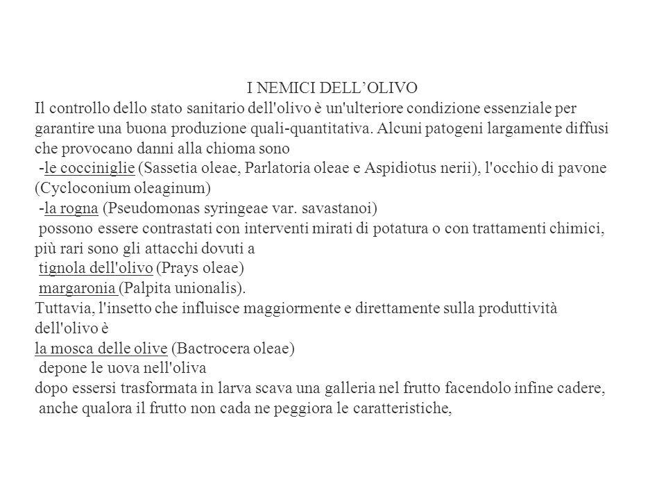 I NEMICI DELLOLIVO Il controllo dello stato sanitario dell olivo è un ulteriore condizione essenziale per garantire una buona produzione quali-quantitativa.
