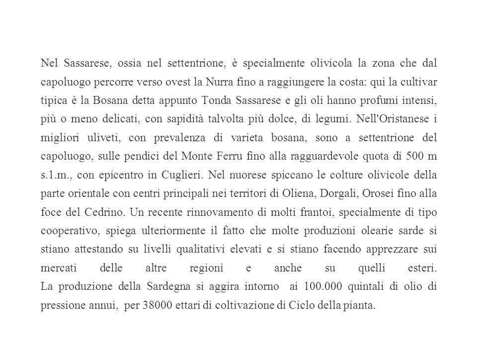 Anche se l'ulivo arrivò in Sardegna fin dal tempo dei navigatori fenici è probabile che i caratteri dell'olivicoltura sarda derivino piuttosto dall'ep