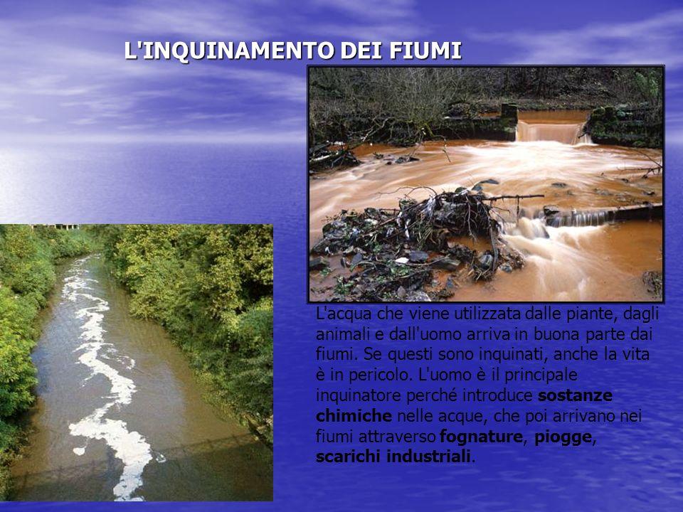 MUCILLAGINI La produzione abnorme di materiale mucillaginoso è un fenomeno molto noto in ambiente marino e non è esclusivo dei mari italiani.In Adriat