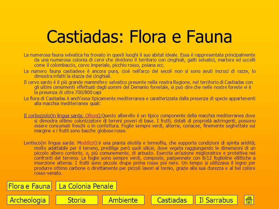 Castiadas: Flora e Fauna La numerosa fauna selvatica ha trovato in questi luoghi il suo abitat ideale. Essa è rappresentata principalmente da una nume