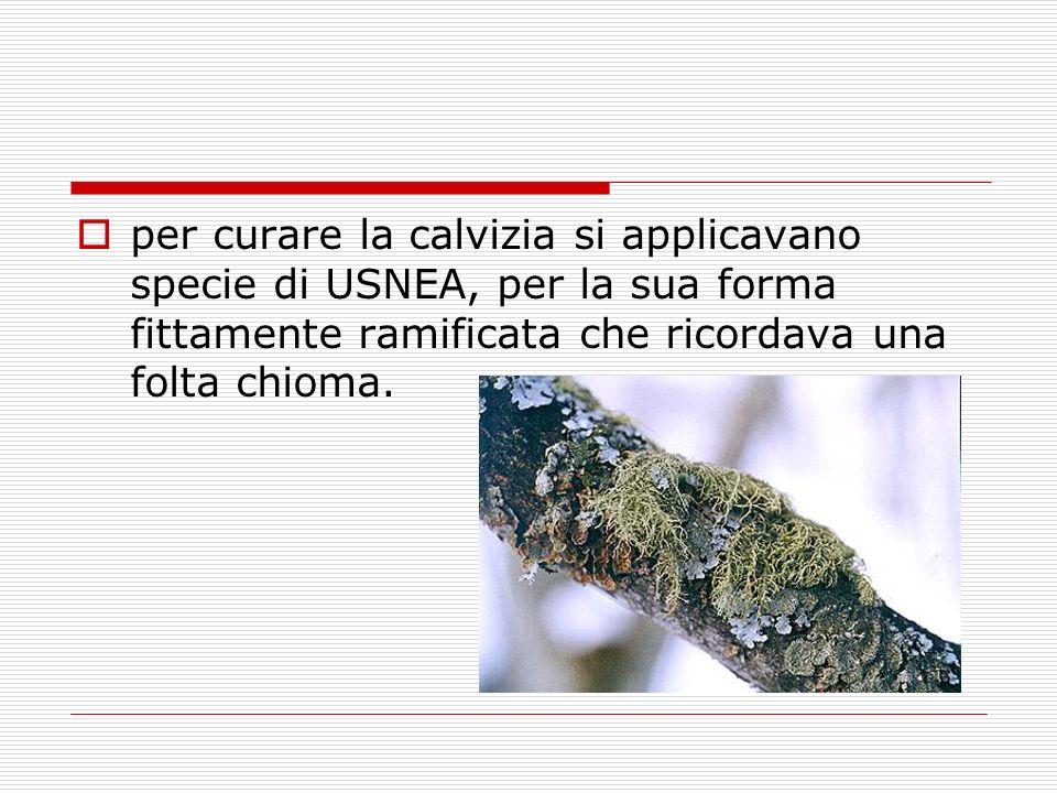 per curare la calvizia si applicavano specie di USNEA, per la sua forma fittamente ramificata che ricordava una folta chioma.