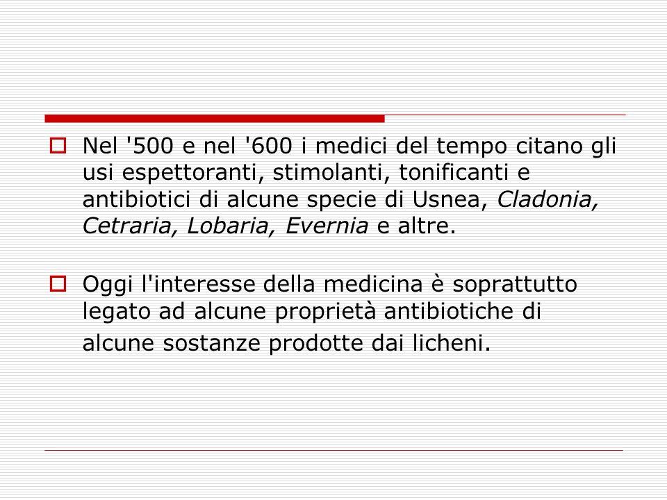 Nel '500 e nel '600 i medici del tempo citano gli usi espettoranti, stimolanti, tonificanti e antibiotici di alcune specie di Usnea, Cladonia, Cetrari