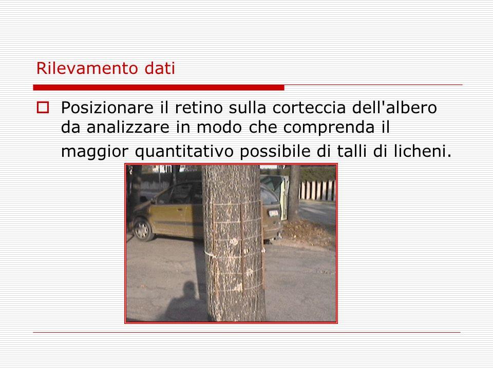 Rilevamento dati Posizionare il retino sulla corteccia dell'albero da analizzare in modo che comprenda il maggior quantitativo possibile di talli di l