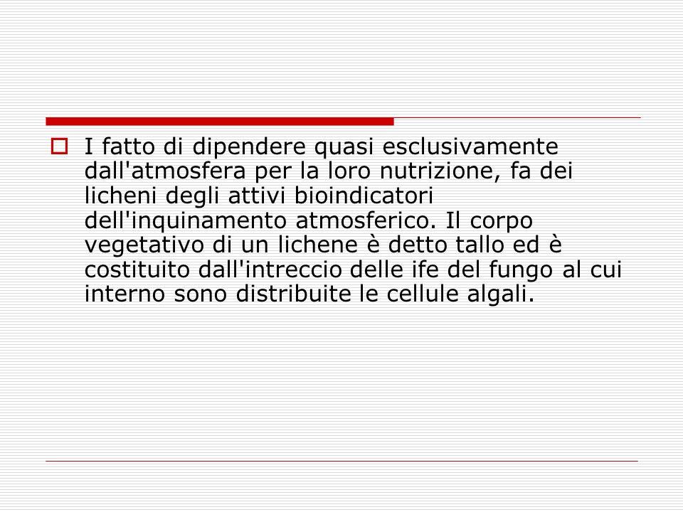 LICHENI E ALIMENTAZIONE La presenza di vitamine e proteine consente l uso alimentare dei licheni fin dall antichità.