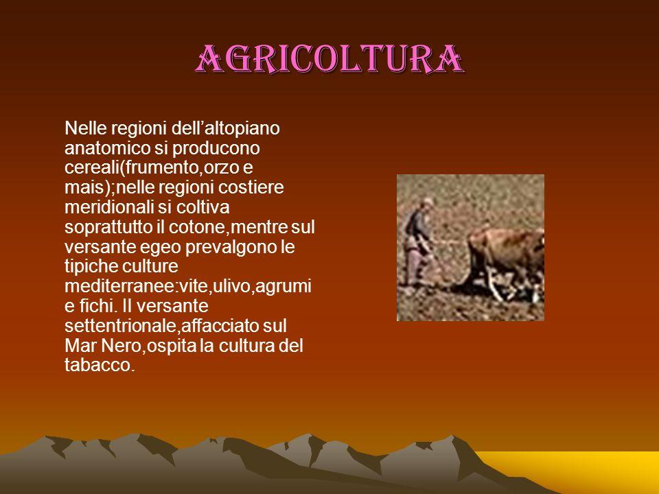 AGRICOLTURA Nelle regioni dellaltopiano anatomico si producono cereali(frumento,orzo e mais);nelle regioni costiere meridionali si coltiva soprattutto