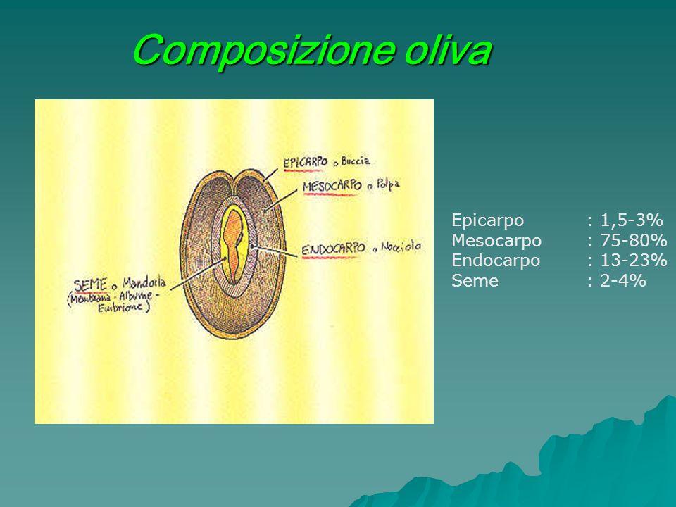 Composizione oliva Epicarpo: 1,5-3% Mesocarpo: 75-80% Endocarpo: 13-23% Seme: 2-4%