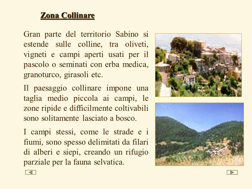 Gran parte del territorio Sabino si estende sulle colline, tra oliveti, vigneti e campi aperti usati per il pascolo o seminati con erba medica, granot