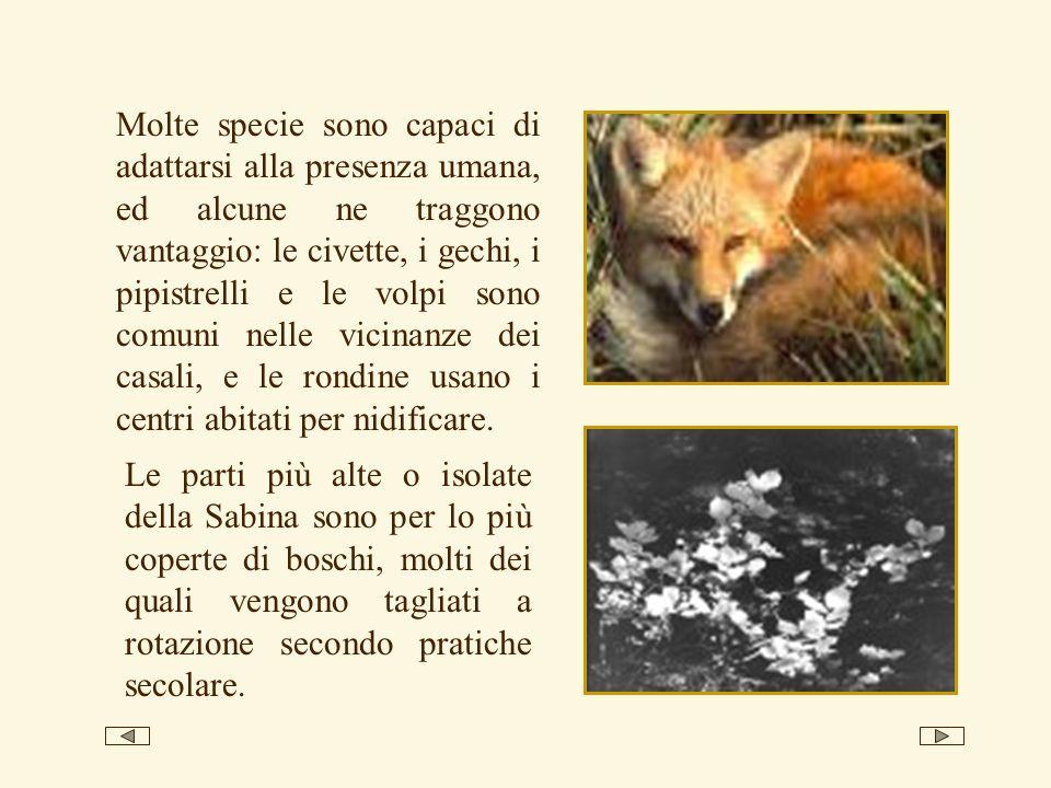 Molte specie sono capaci di adattarsi alla presenza umana, ed alcune ne traggono vantaggio: le civette, i gechi, i pipistrelli e le volpi sono comuni