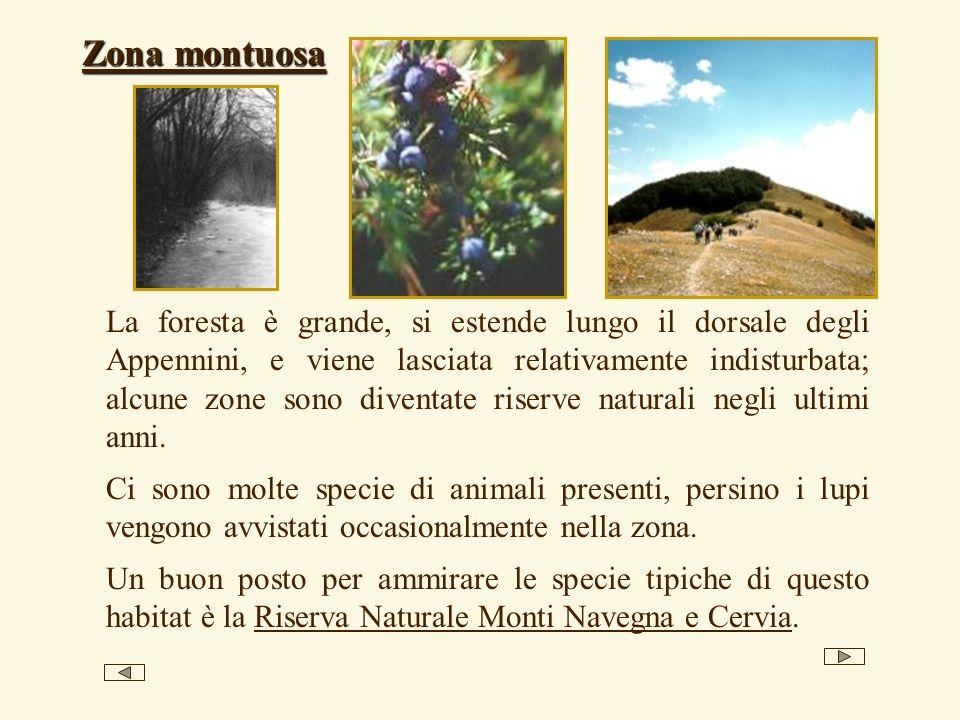 La foresta è grande, si estende lungo il dorsale degli Appennini, e viene lasciata relativamente indisturbata; alcune zone sono diventate riserve natu
