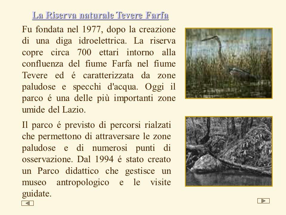 Fu fondata nel 1977, dopo la creazione di una diga idroelettrica. La riserva copre circa 700 ettari intorno alla confluenza del fiume Farfa nel fiume