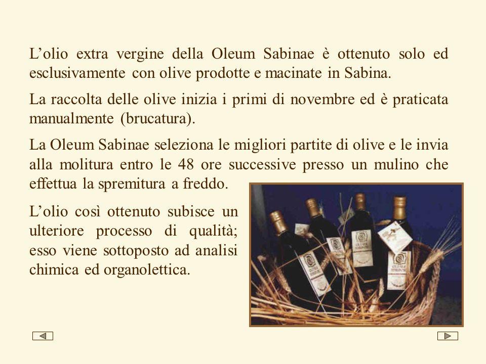 Lolio extra vergine della Oleum Sabinae è ottenuto solo ed esclusivamente con olive prodotte e macinate in Sabina. La raccolta delle olive inizia i pr