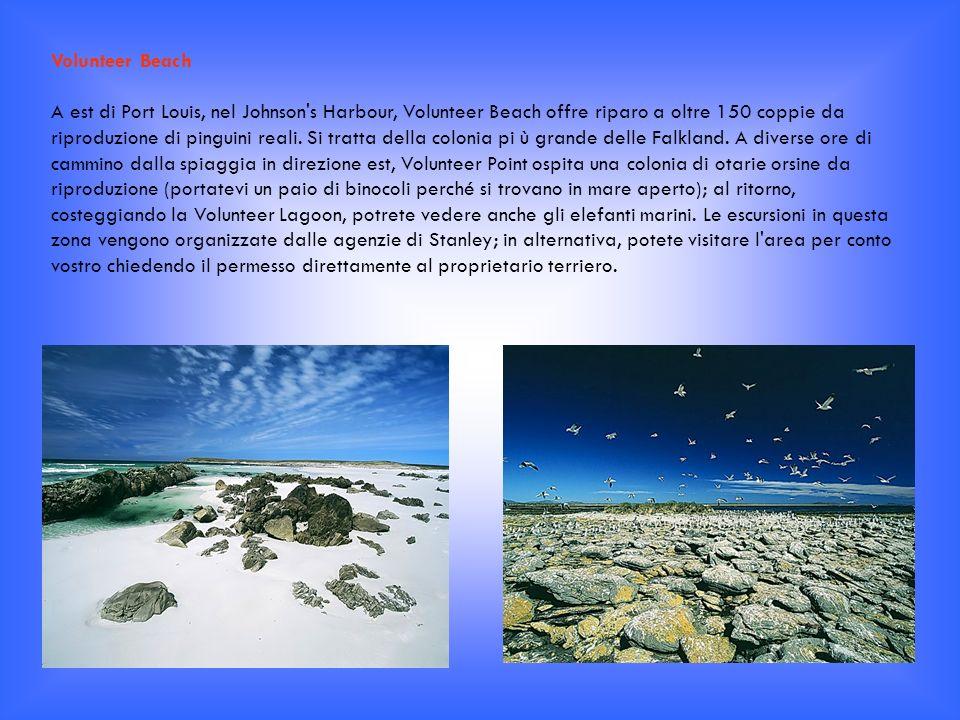 Sea Lion Island Al largo della costa meridionale di Falkland Orientale, la minuscola Sea Lion misura meno di un miglio da costa a costa, ma è estremamente ricca in termini di flora e fauna.