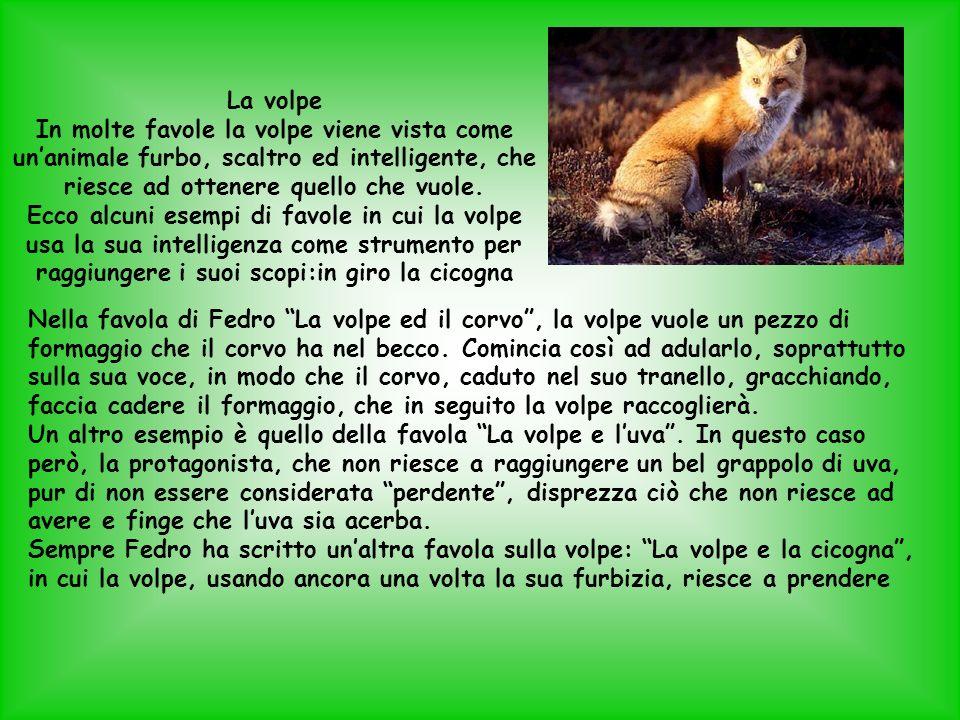 La volpe In molte favole la volpe viene vista come unanimale furbo, scaltro ed intelligente, che riesce ad ottenere quello che vuole. Ecco alcuni esem