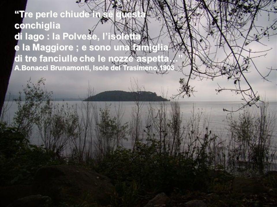 Tre perle chiude in sé questa conchiglia di lago : la Polvese, lisoletta e la Maggiore ; e sono una famiglia di tre fanciulle che le nozze aspetta… A.Bonacci Brunamonti, Isole del Trasimeno,1903